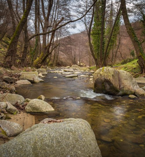 beautiful-boulders-branches-354611